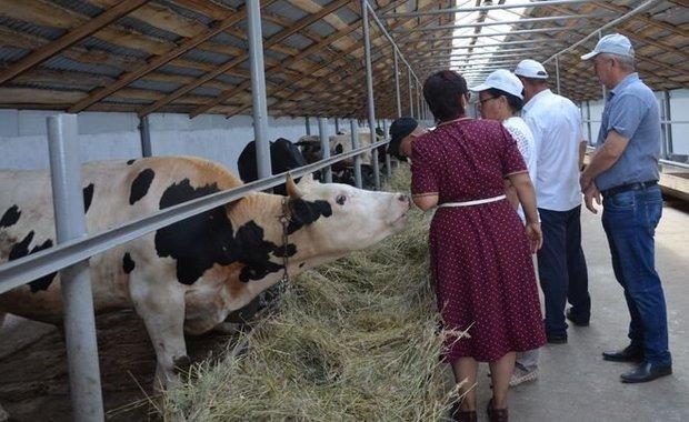 Ко второму чтению надо существенно снизить входной билет для социальной сферы и для сельского хозяйства. Фото agro.tatarstan.ru